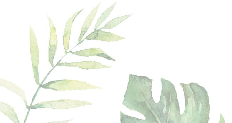 illustration of tropical leaves